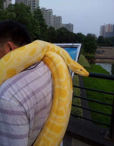 Nothing to See Here, Just Bathing My Python