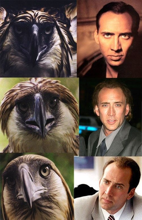 Here's Why Nicolas Cage Is the Most Amazing Actor