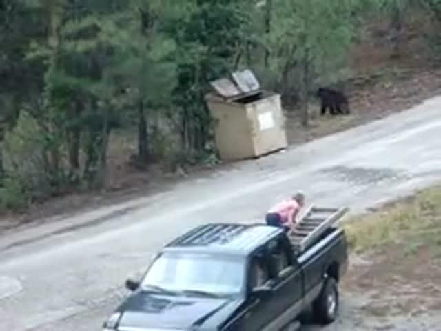 How to Rescue Bears with Nothing but a Ladder