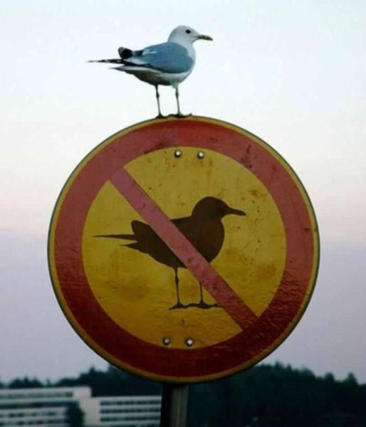 Hilarious Public Animal Signs