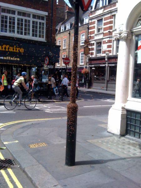 A Bemusing Sight in London's Soho
