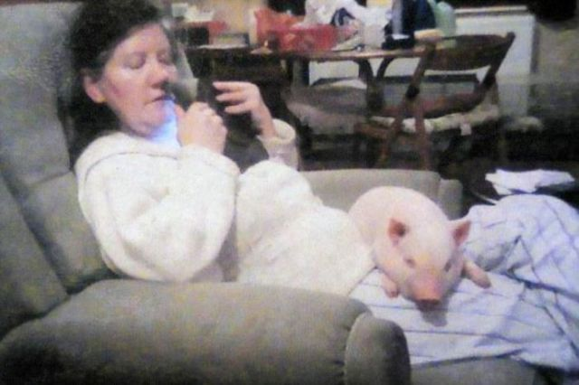 """Micro Pig Goes """"Slightly"""" Overweight"""
