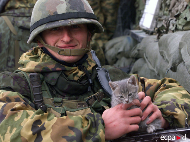 Cats in the Army