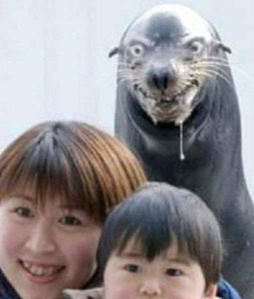 the_ultimate_animal_photobombs_collection_640_39.jpg