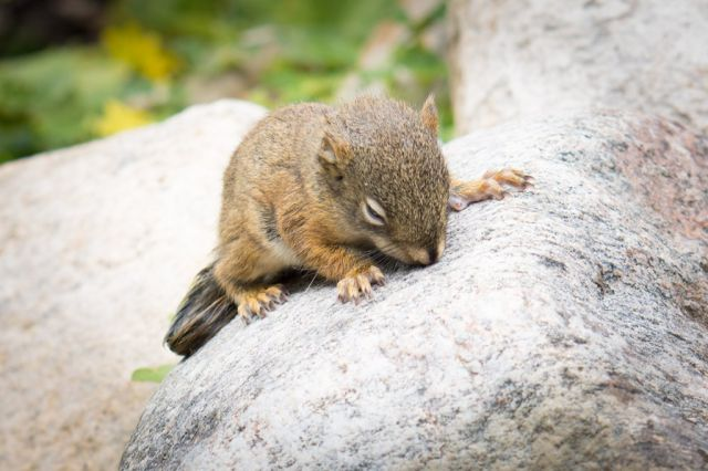 Tiny Squirrel Luckily Rescued