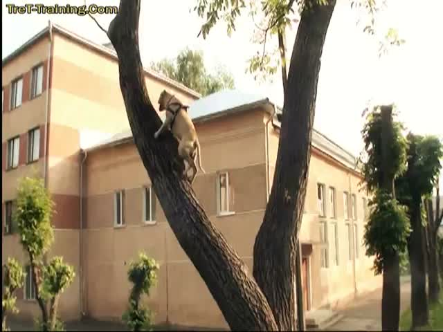 Dog Is Better at Parkour Than I Will Ever Be