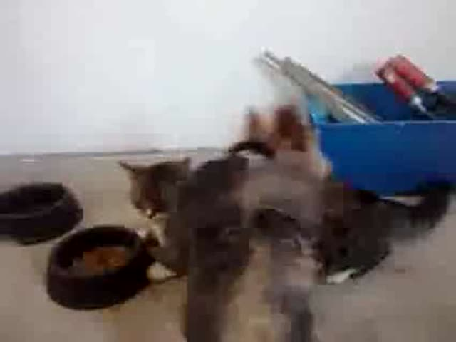 More Proof That Cats Give Zero F**ks