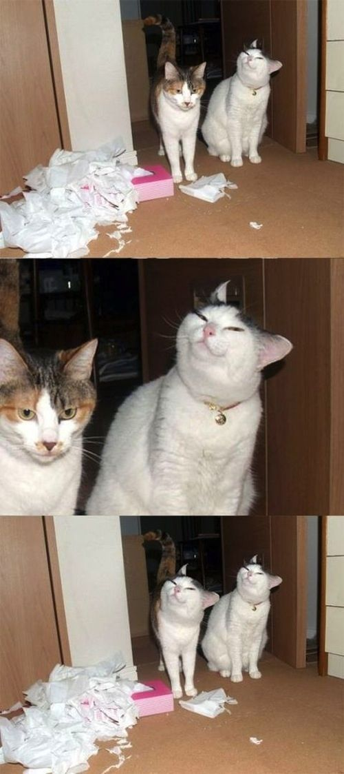Hilarious Face Swapping Photobombs