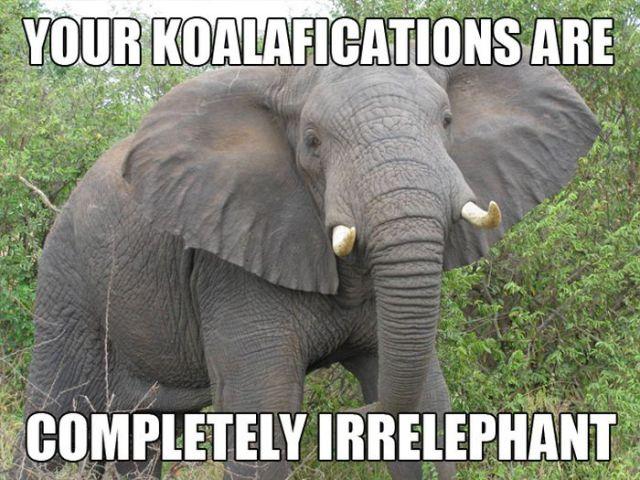 Amusing Animal Puns Selection