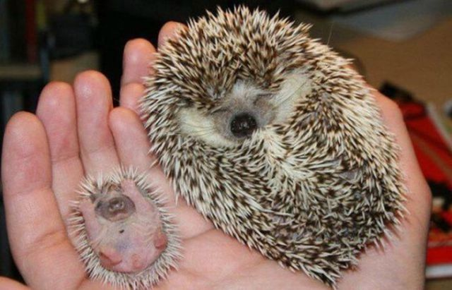 Animal Parents and Kids that Look Totally Alike