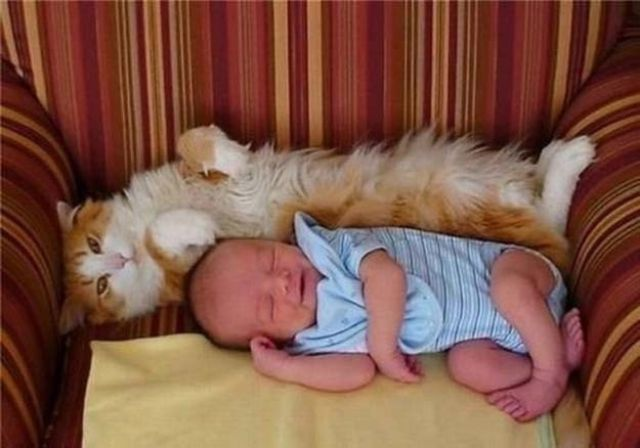 Babies and Cats Being Too Cute