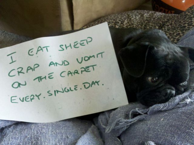 Bad Dogs Publicly Shamed