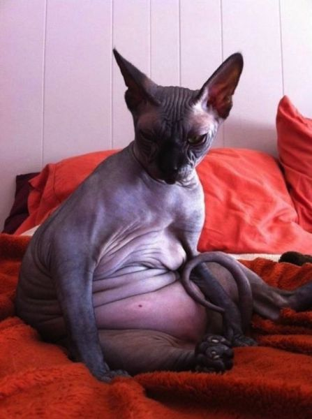 Animals That Obviously Need to Lose Weight