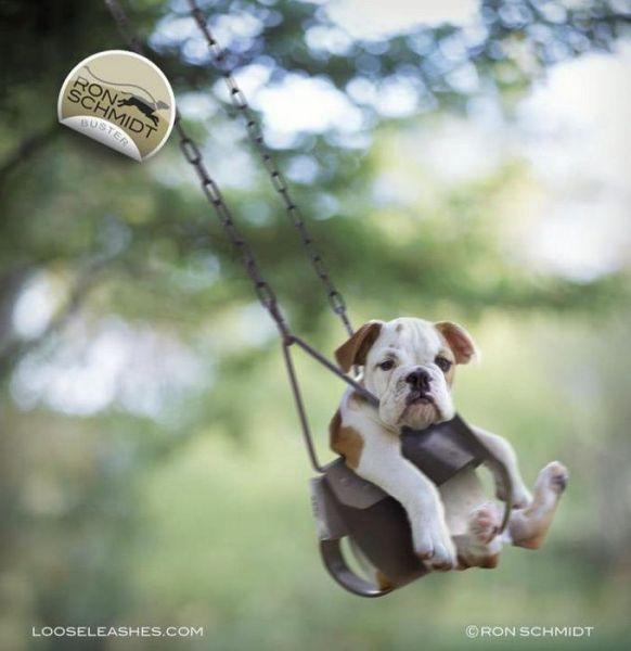 Funny Dog Photos Selection