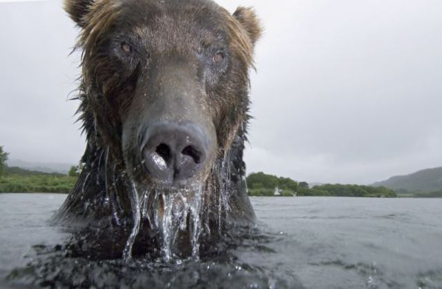 That's How You Take a Wild Bear's Close-Up