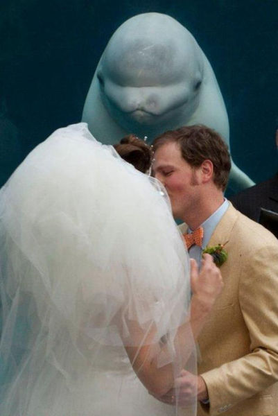 Hilarious Wedding Photobomb Selection