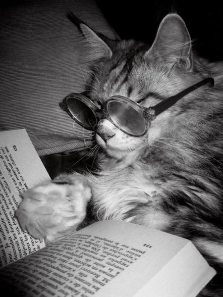 Funny Animals That Are Hungry for Knowledge