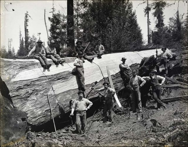 Vintage Photos of Lumberjacks