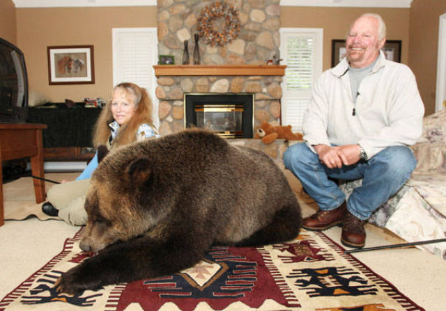 Canadian Couple Has Grizzly Bear Pet