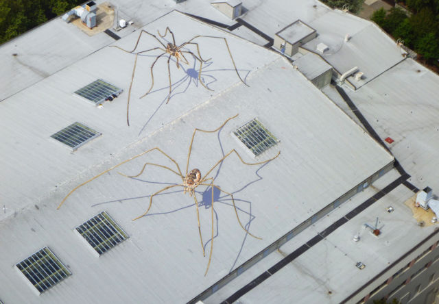 Daddy Longlegs Overtake a Roof