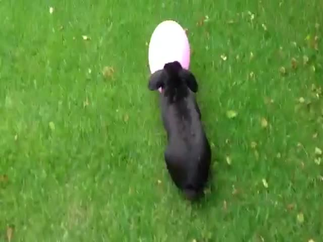 Bunny Loves Balloon Too Much