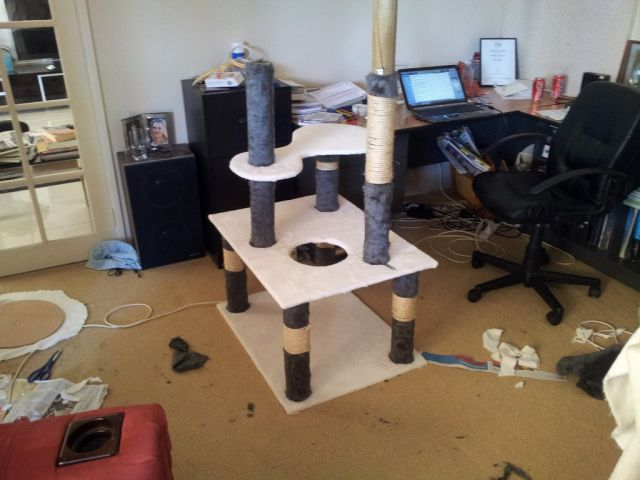 A Girl Builds a Tower for Her Cat