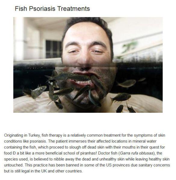 Freaky Therapies Involving Animals