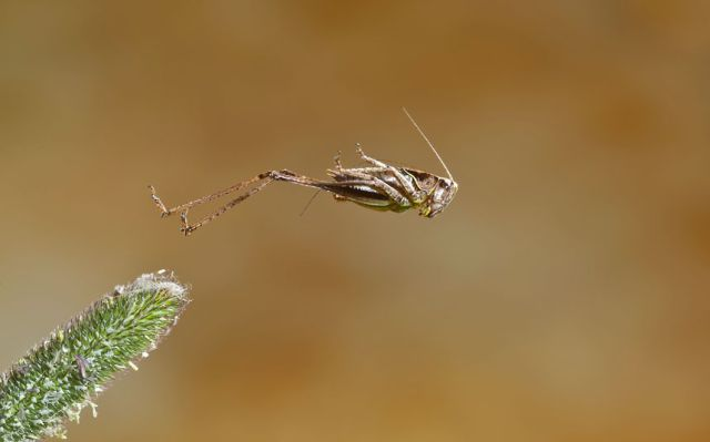 The Best Photos of the 2012 British Wildlife Photography Awards
