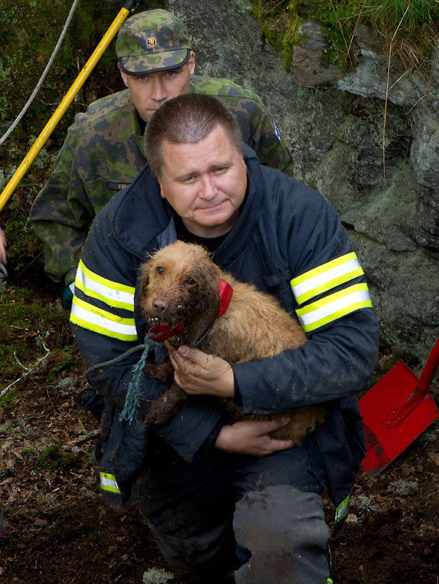 Dogs Saved After Being Trapped for Two Days
