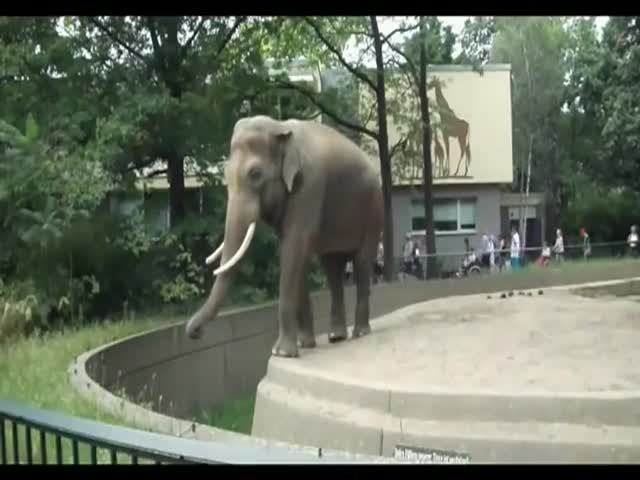 Douchebag Elephant