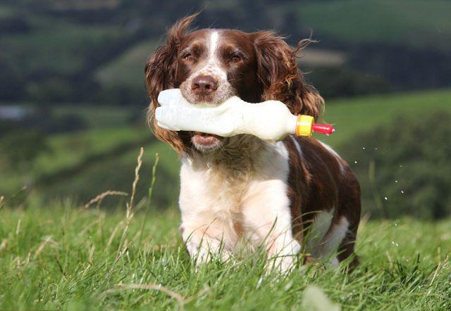 UK Dog Is an Amazing Lamb Nurse