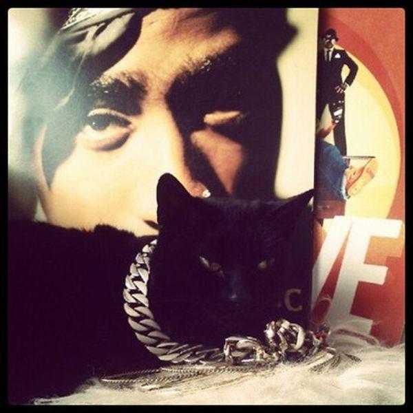 Instagram's Rich Cats