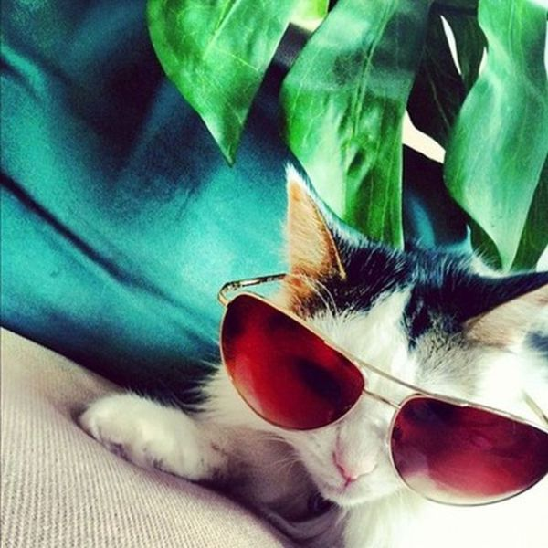 Instagram's Rich Cats