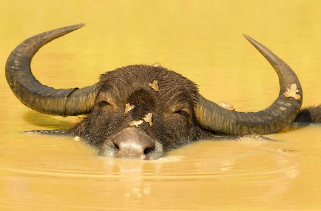 Cool Pics from 2012 National Geographic Photo Contest