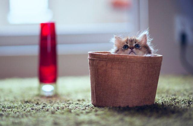 What a Funny Little Kitten!