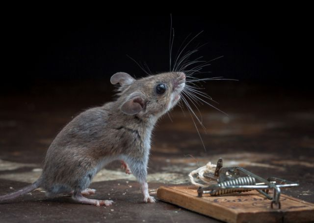 A Very Lucky Mouse