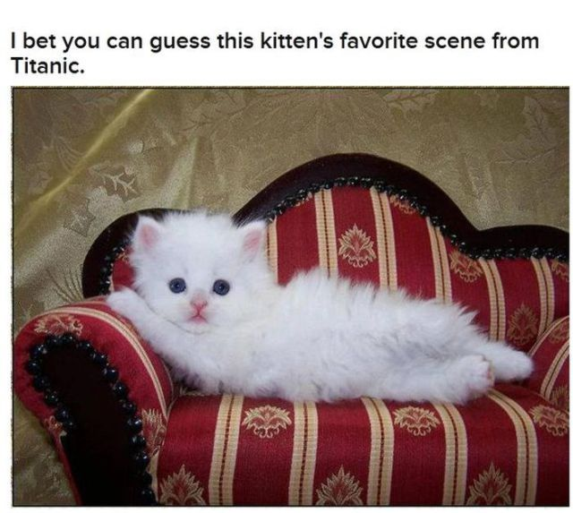 Funny Cats That Look Like Movie Characters