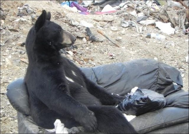 This Bear Loves to Chill Out