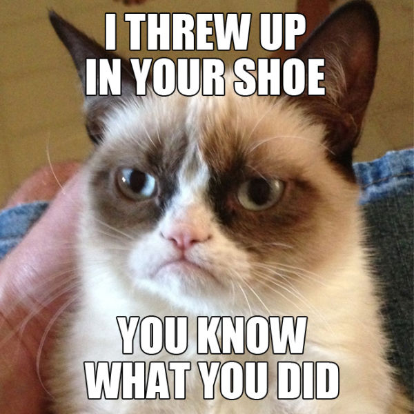 "Funny ""Grumpy Cat"" Meme Selection"