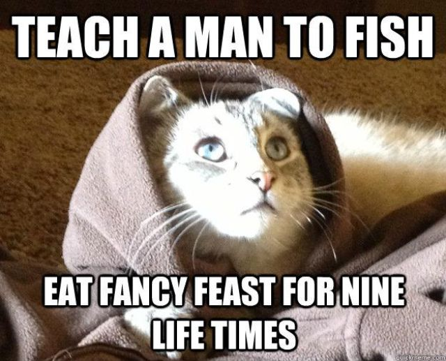 Biblical Moments If Jesus Was a Cat