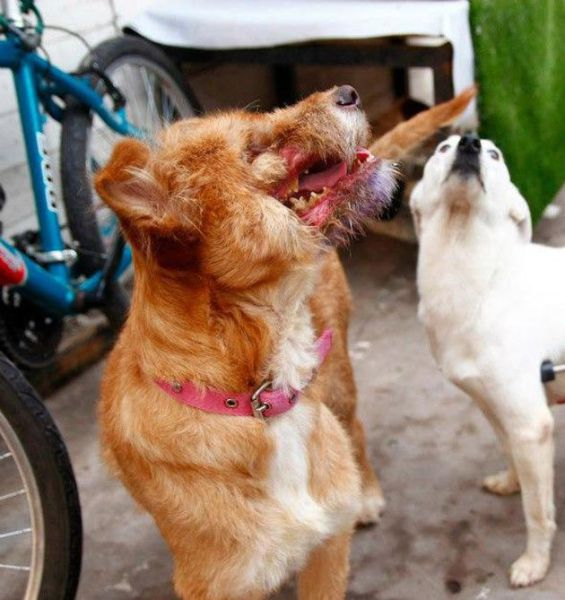For the Love of Dogs: A Rescue Story