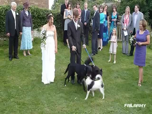 Wedding Fails Compilation