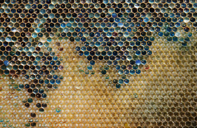 Bees are Producing Different Colours of Honey but You Would Never Guess Why
