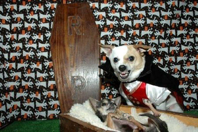 These Pets Are Sure To Make Their Owners Pay for Their Dud Costumes