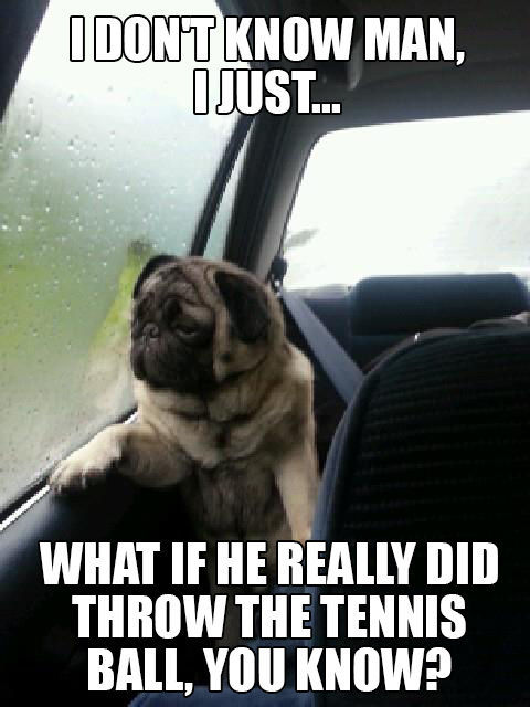 "The Funniest of the ""Introspective Pug"" Meme"