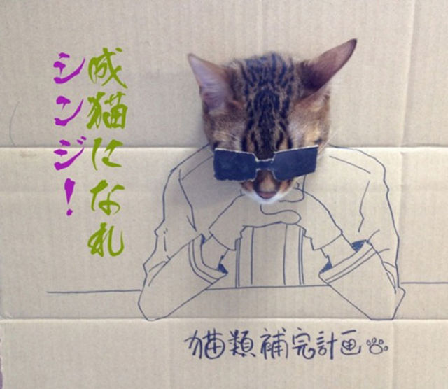 Cat in a Box…