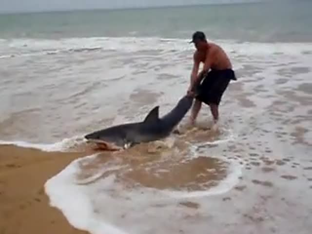 Fearless Guy Drags Great White Shark Back into the Ocean