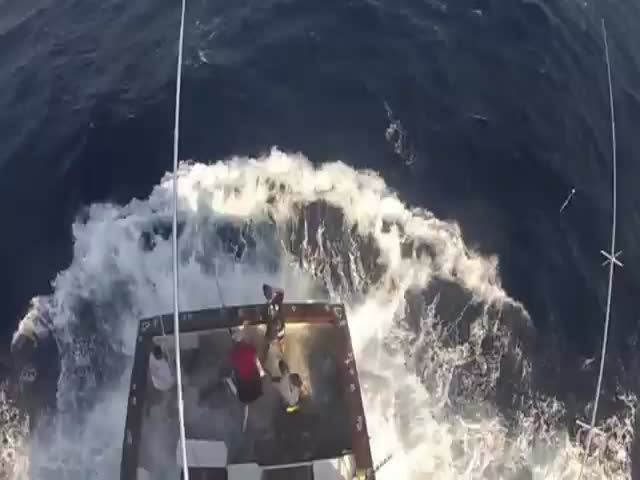 600lb Marlin Jumps in Boat, Almost Impales a Fisherman