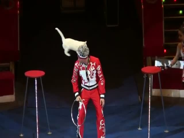 Russian Circus Cats Can Do Crazy Stuff