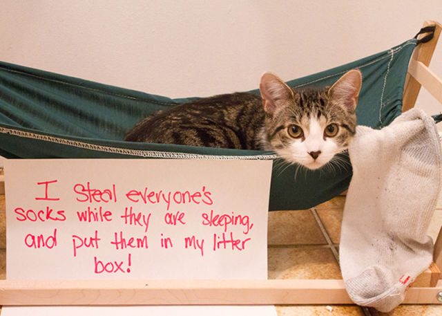 A Small Payback for Disgraceful Cats!